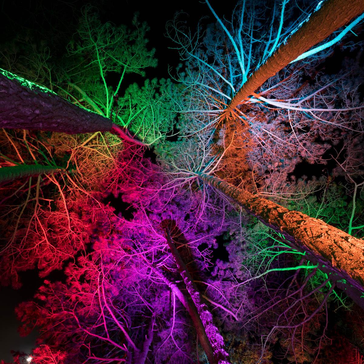 Frankfurt Palmengarten Winterlichter
